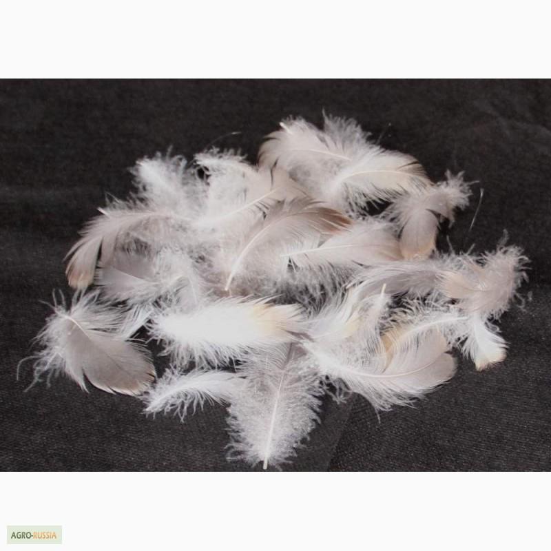 Гусиный пух и перья как дополнительная прибыль