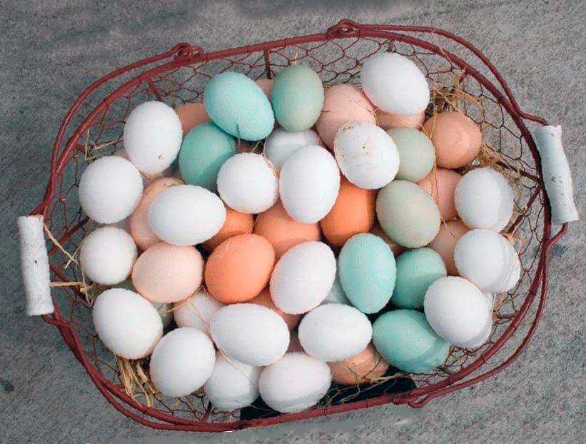 Какие куры несут двухжелтковые яйца