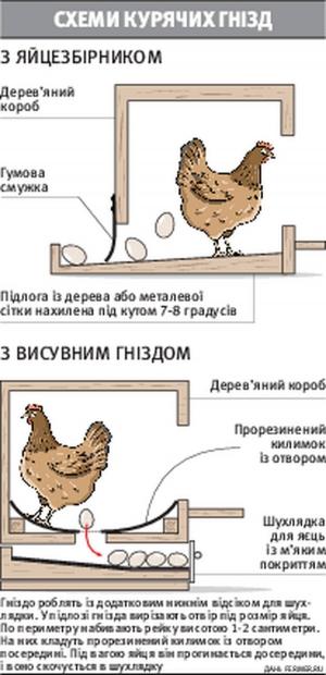 Чем кормить кур чтобы не клевали яйца