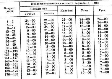 Световой режим для бройлеров: продолжительность освещения для цыплят в виде таблицы