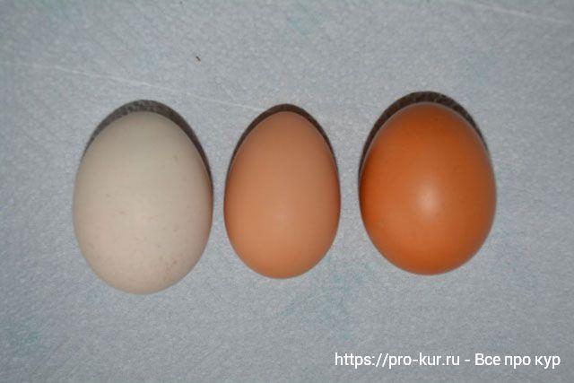 7 самых важных причин, почему курицы перестают нести яйца