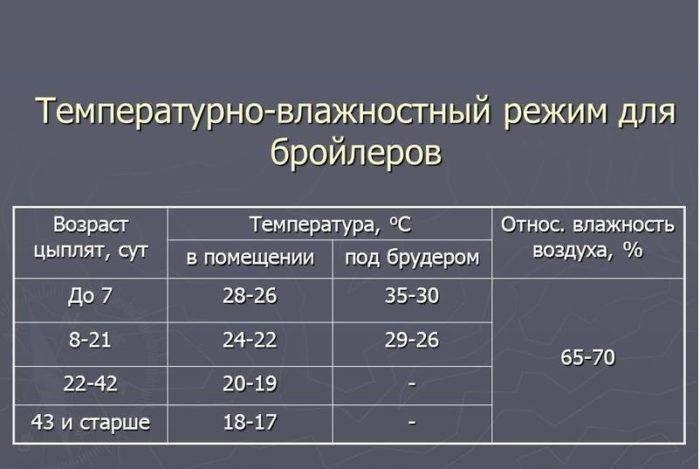 Температурный режим для цыплят-бройлеров: таблица по дням и условия содержания