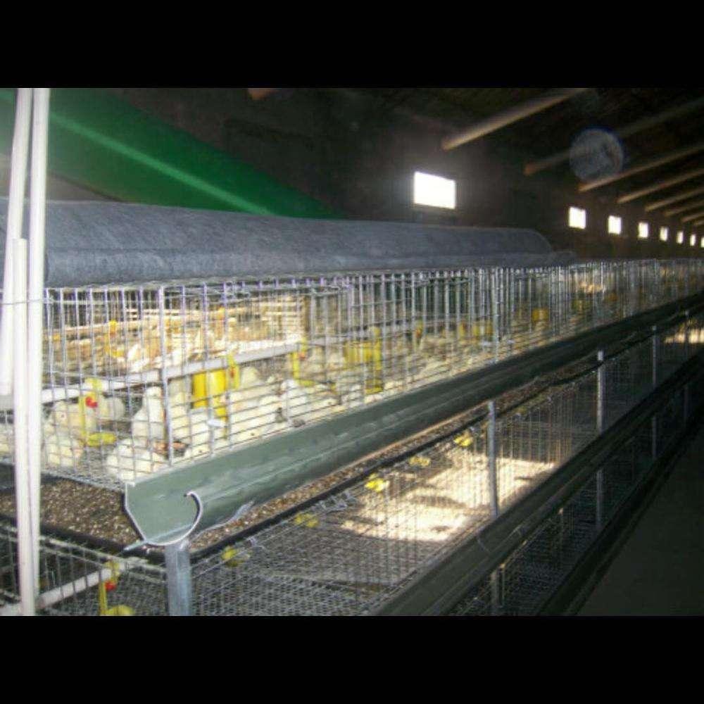 Клетки для кур: топ-9 лучших моделей разных размеров с яйцесборником и без, для любительского и промышленного использования