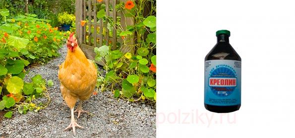 Ивермек для кур несушек, бройлеров и цыплят от глистов и клещей: инструкция по применению