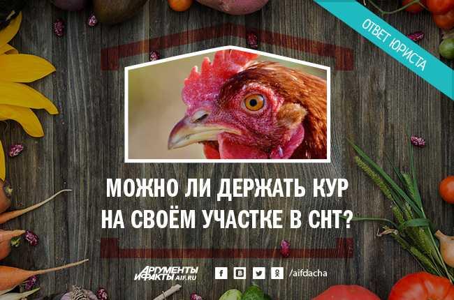 Можно ли держать кур на участке СНТ, даче, в частном доме, городе? Правила содержания птиц согласно российскому законодательству