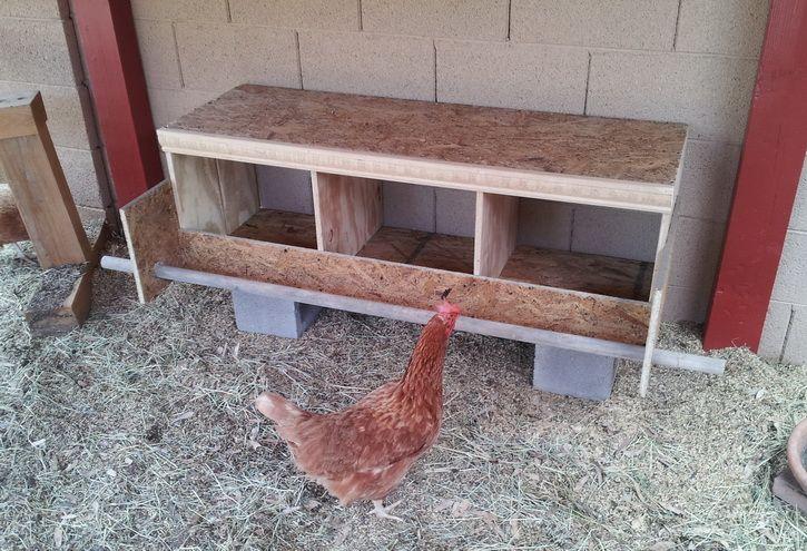 Как приучить курицу нестись в гнезде, а не на полу?