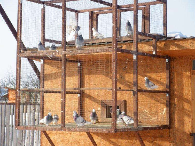 Строительство голубятни: проект, чертеж, обустройство