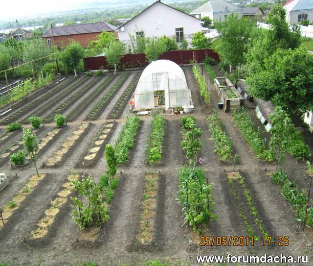 3 способа совместить кур и огород на дачном участке