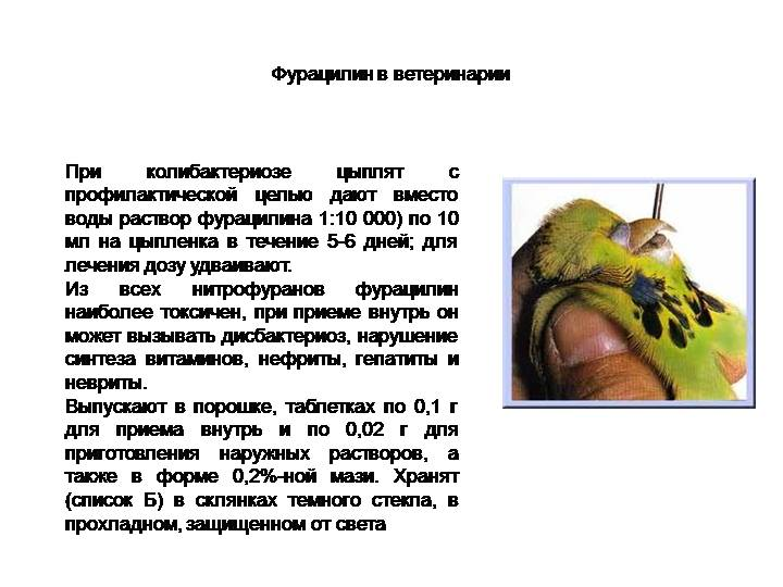 Фурацилин для цыплят бройлеров: дозировка, как правильно поить