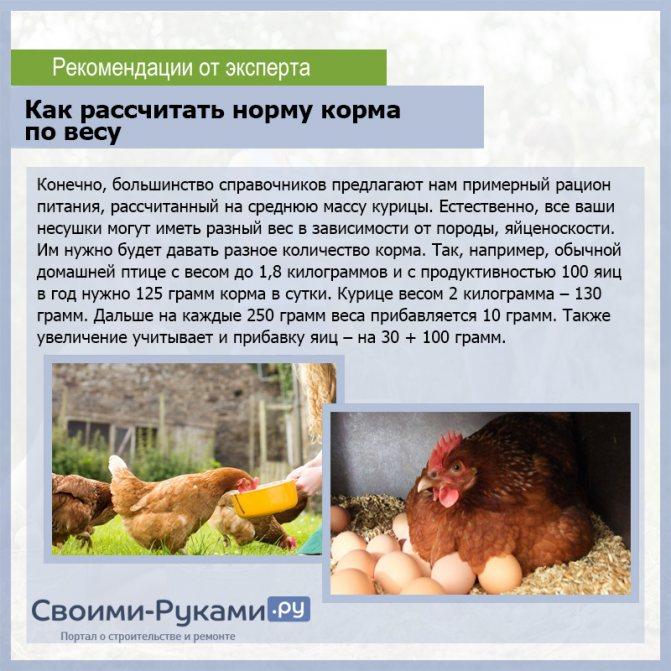 Можно ли давать рапс курам и цыплятам?