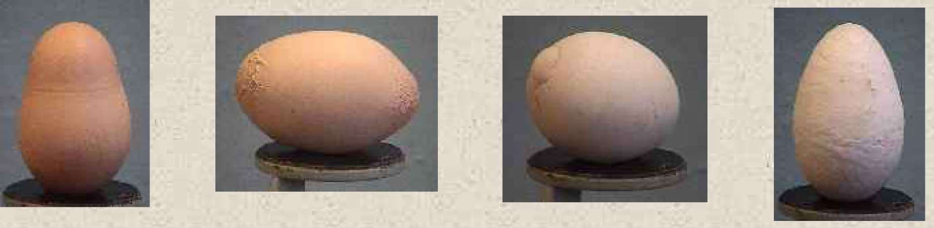 Тонкая скорлупа у яиц и другие проблемы яйцекладки кур
