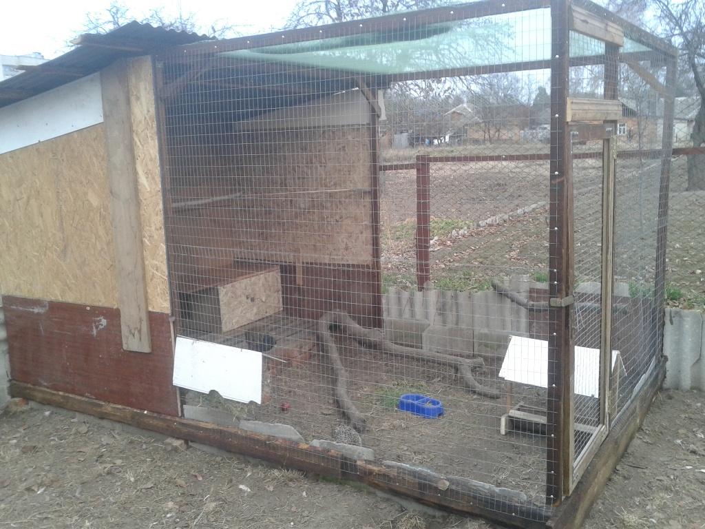 Содержание фазанов в домашних условиях: описание процесса