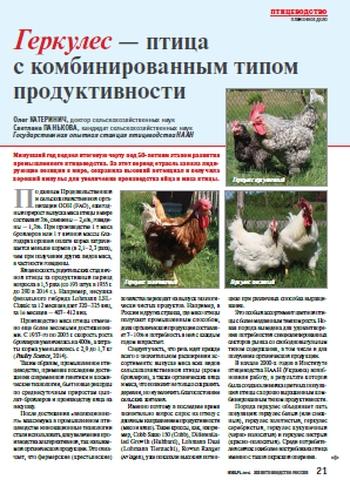 Чешский доминант - яичная порода кур. Характеристики, особенности разведения и кормления кросса, инкубация