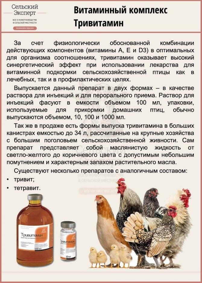 Энромаг – инструкция для применения в ветеринарии для домашней птицы