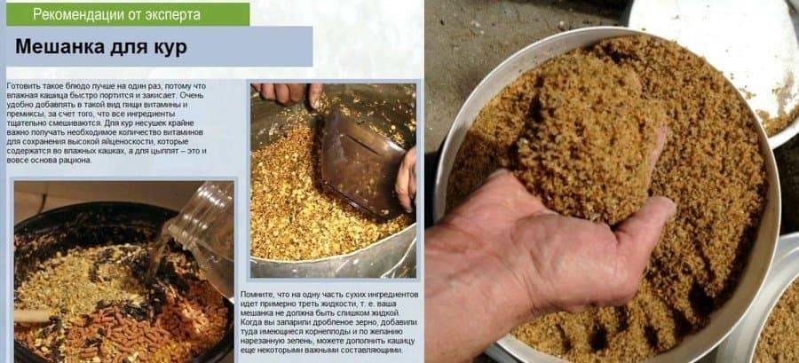 Жмых подсолнечный для кур: можно ли давать, как правильно кормить