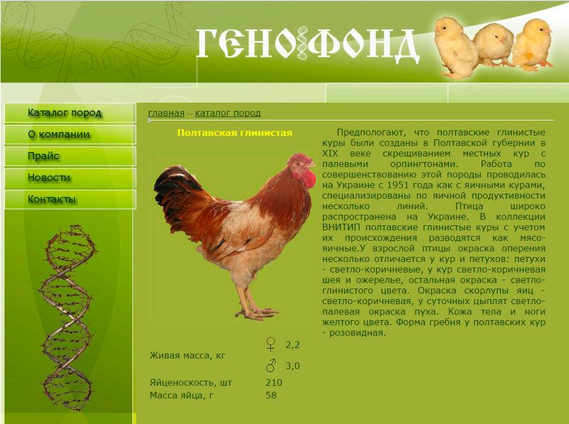 Сколько кур нужно на одного петуха для оплодотворения яиц? Количество самцов на 10, 15, 20 и 30 несушек