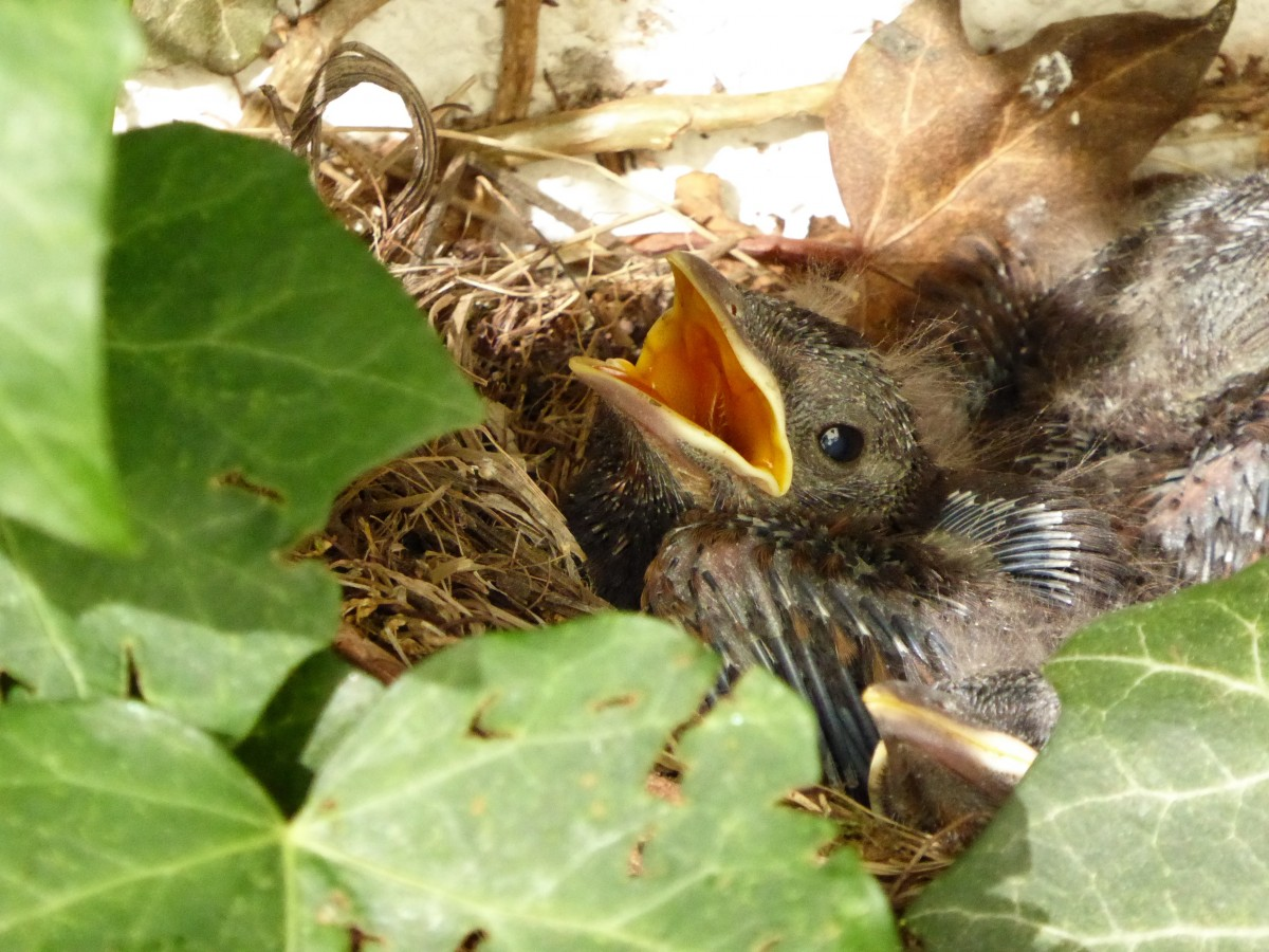 Фото птенцов диких птиц сразу после вылупления