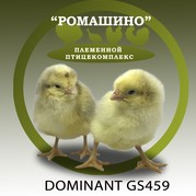 Родительское стадо кур– здоровые цыплята от здоровых родителей