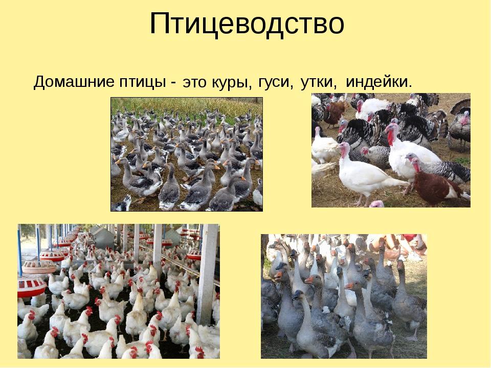 Органическое птицеводство – понятие и отличие