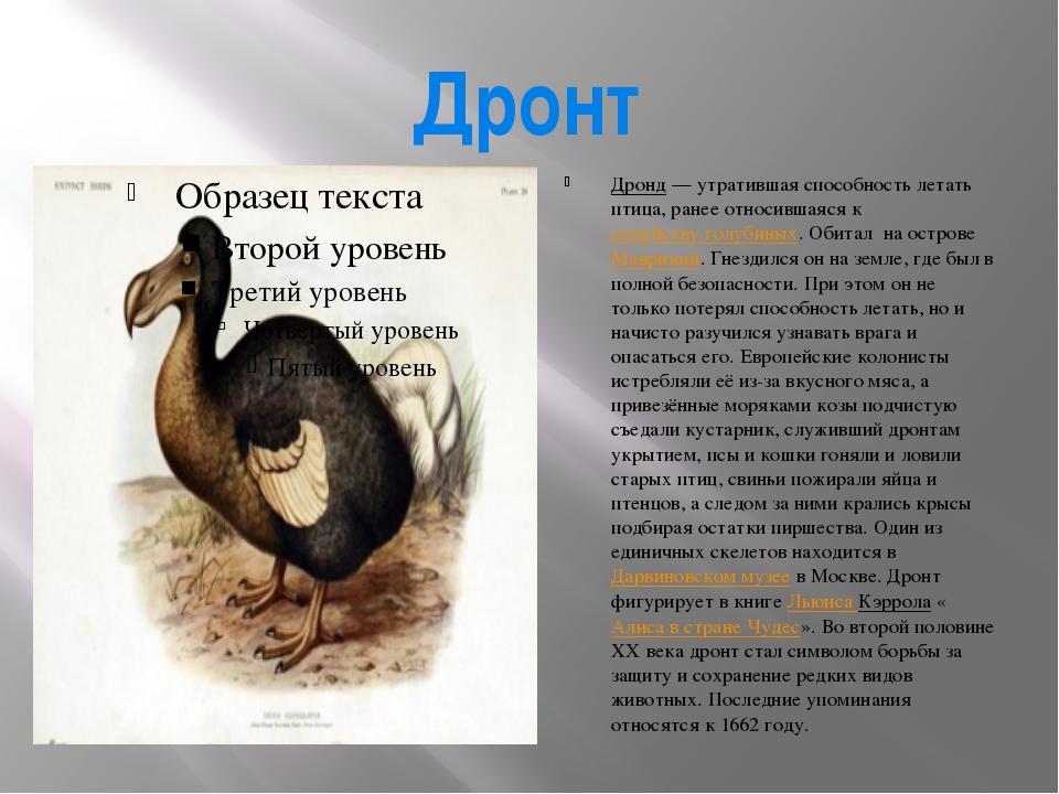 Почему курицы и петухи не летают? Эволюционные изменения, строение тела и другие причины