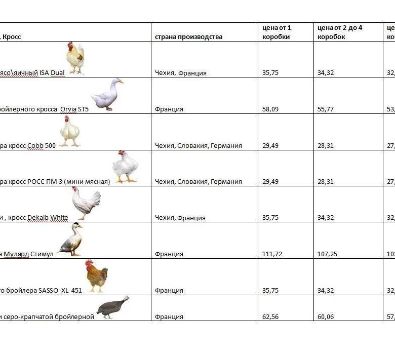 Разведение гусей, как бизнес – организация и предполагаемая прибыль от продажи мяса