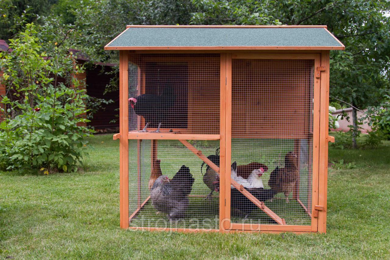 Разведение птицы в домашних условиях на даче или в саду