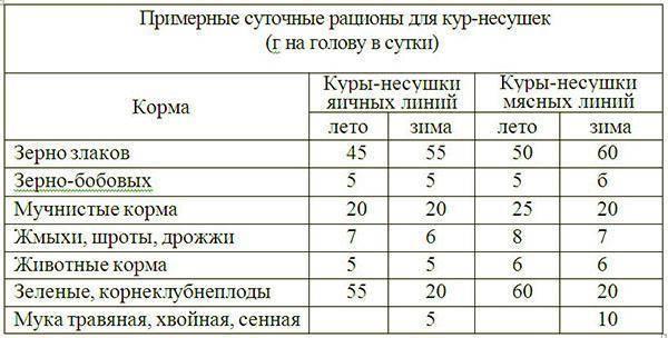 Сколько живут куры несушки