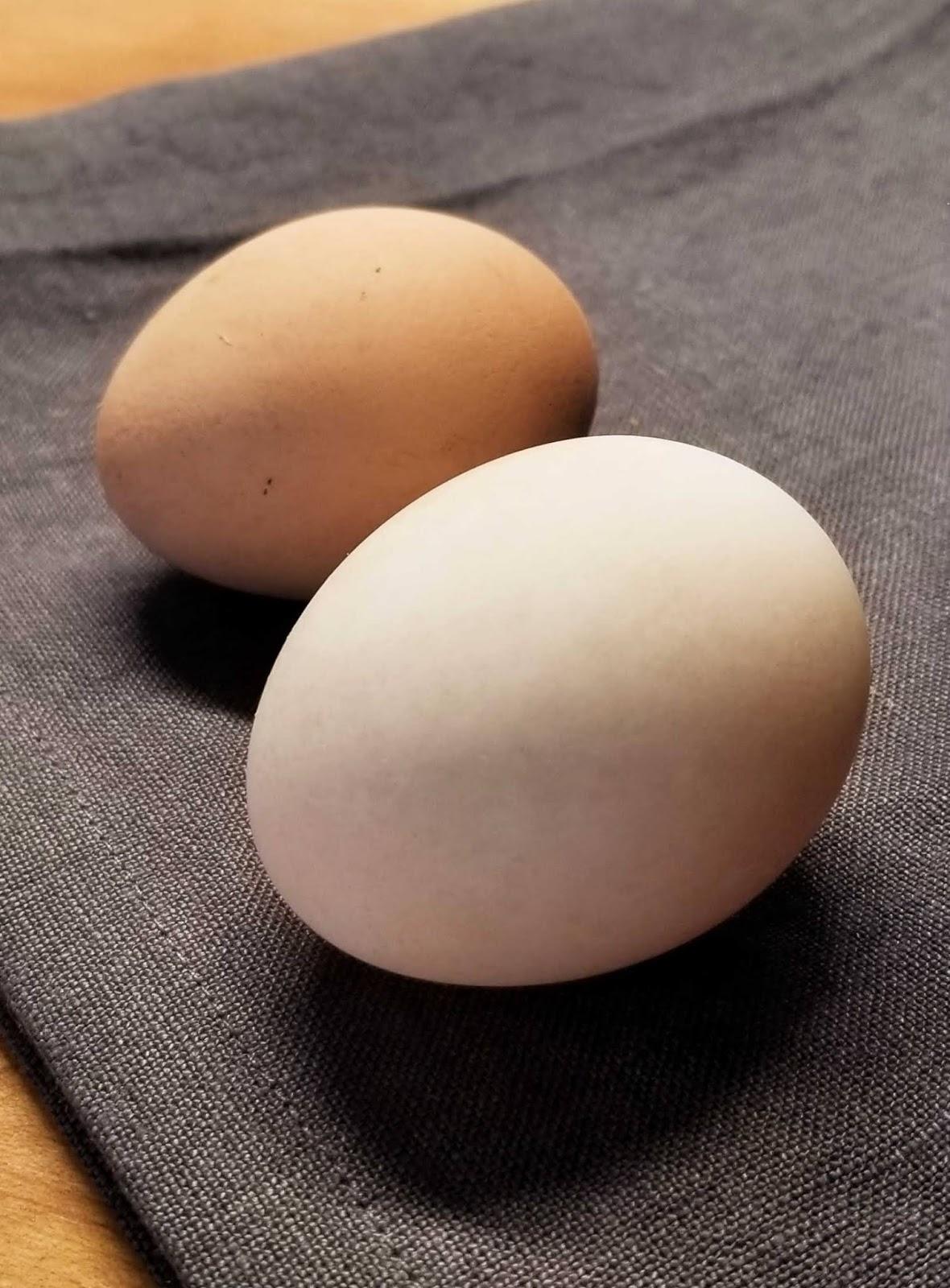 Чем утиные яйца лучше куриных? 12 плюсов и 1 минус