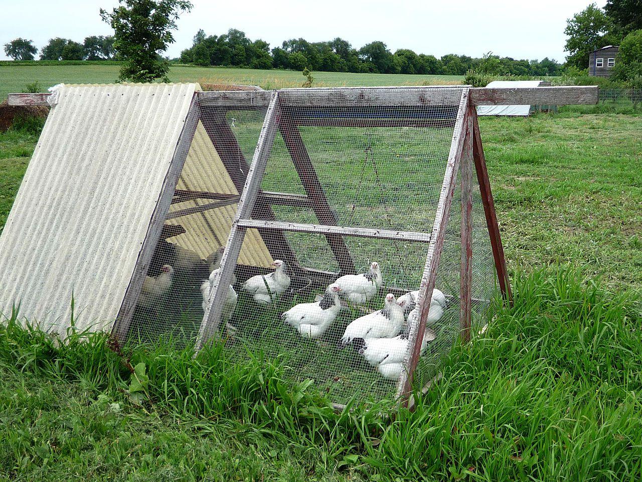 Создание мини-фермы для несушек на участке