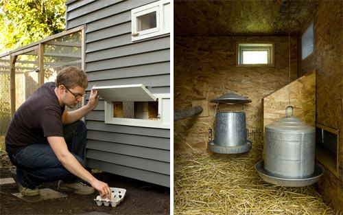 Как построить курятник в яме?