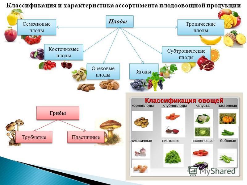 Можно ли давать курам грибы: вареные или свежие. Правила и нормы кормления