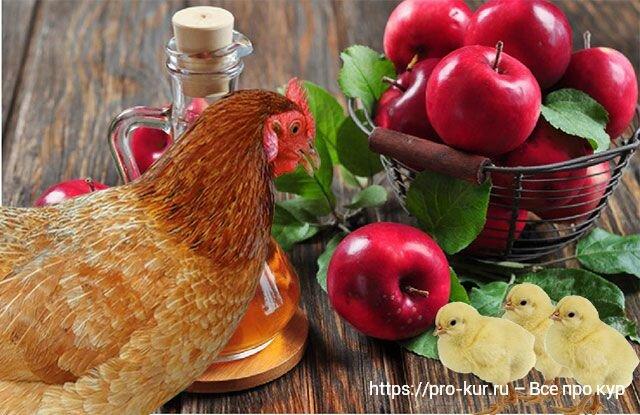 Яблочный уксус курам и цыплятам