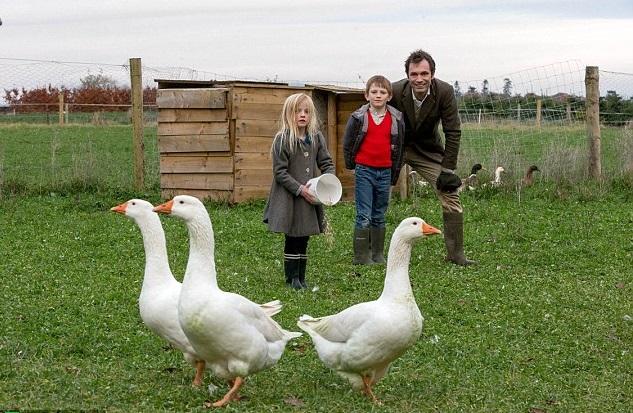 Содержание, кормление и размножение домашнего гуся