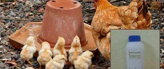 Алоэ вера для кур и цыплят