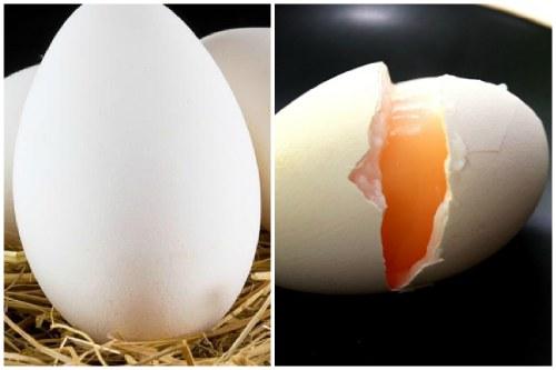 12 фактов о гусиных яйцах