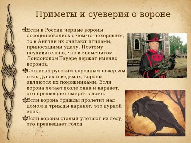 Совы — народные приметы, поверья и легенды