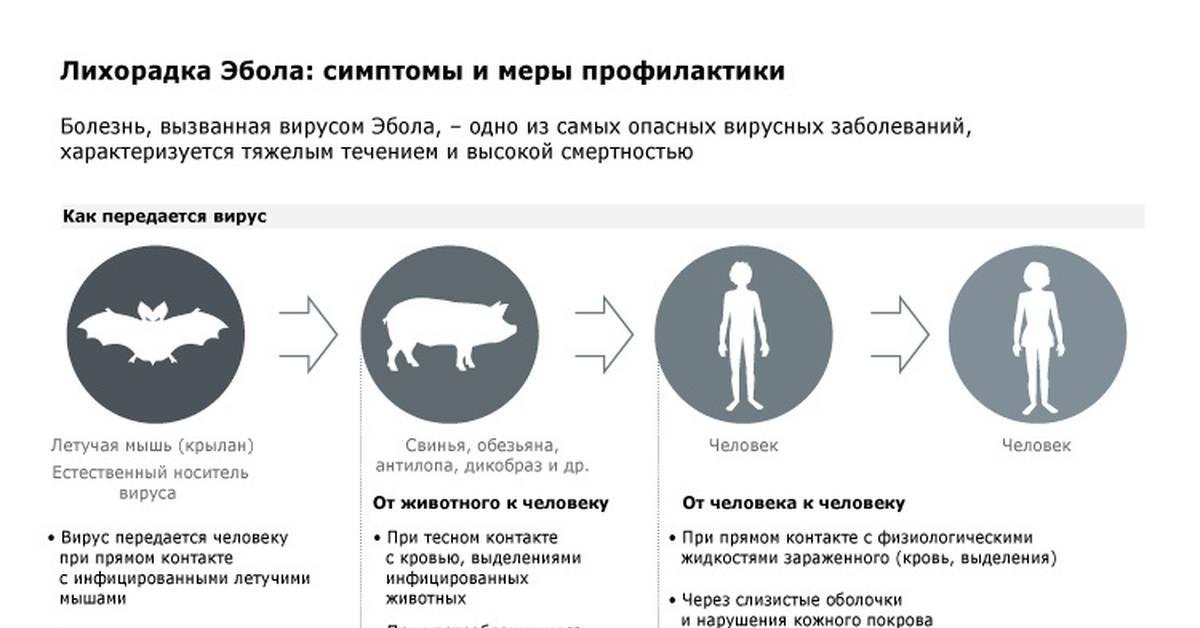 Почему дохнут цыплята: что делать и чем лечить? Рейтинг смертельных и опасных заболеваний