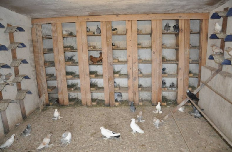 Конструируем гнездо для голубей