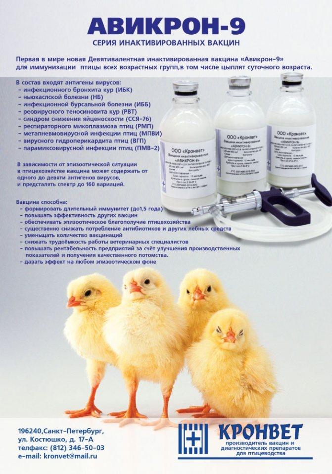 Тилозин для кур, цыплят и бройлеров. Инструкция по применению и дозировка