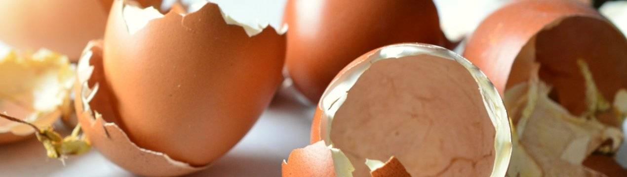 ТОП-6 причин, почему куры несут яйца с тонкой и мягкой скорлупой