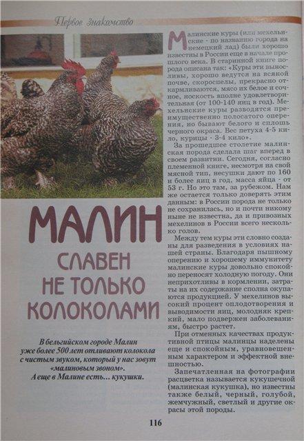 Мехеленская Кукушка порода кур описание с фото