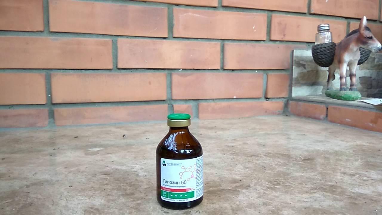 Описание и применение антибиотика Родотиум для голубей