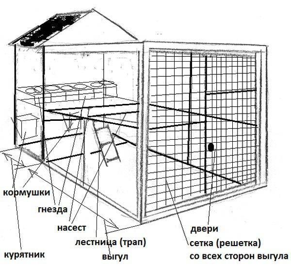 Как правильно разводить домашних кур несушек