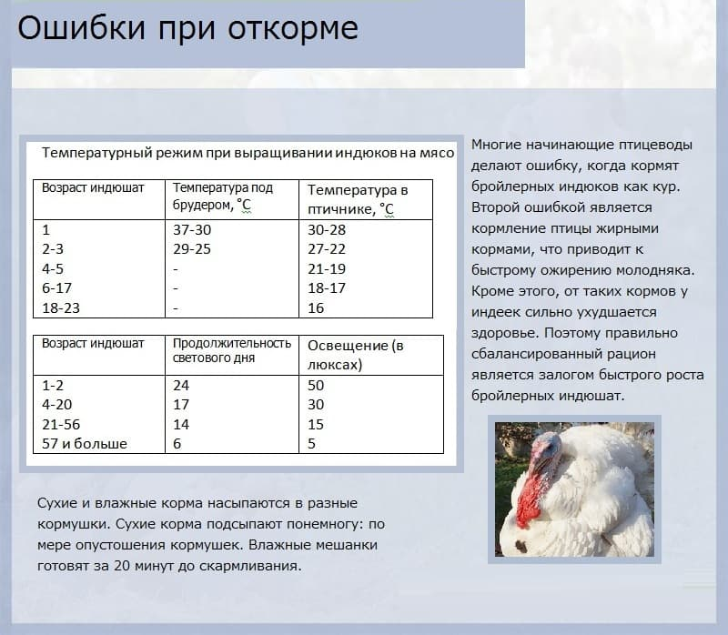 Правильное и комфортное содержание индюков в зимнее время