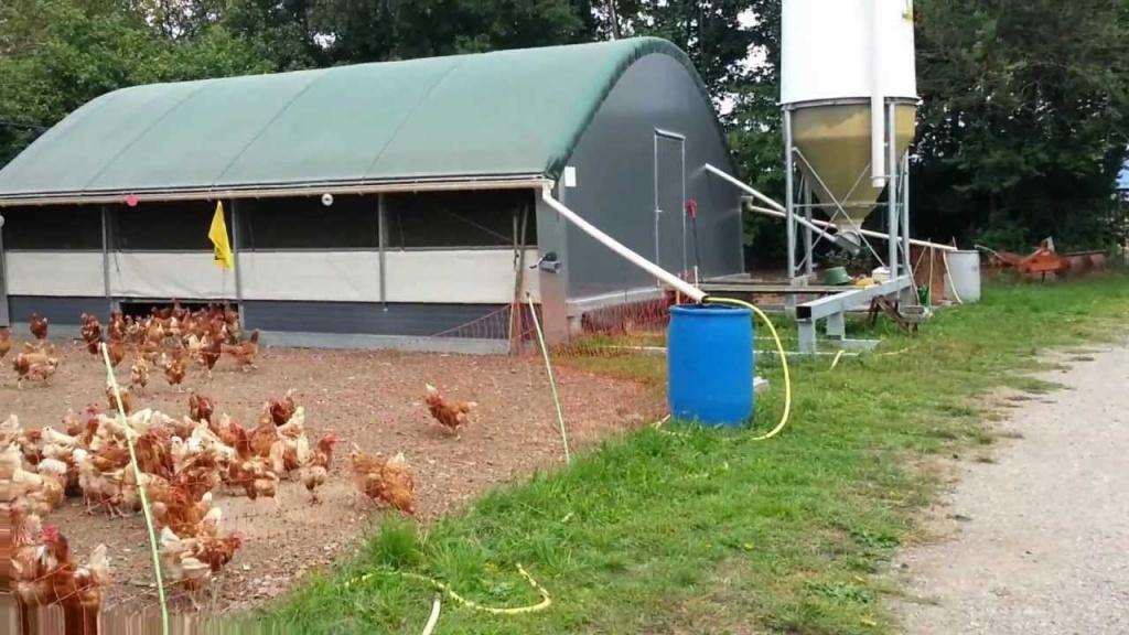 Что учесть при строительстве курятника для мини фермы