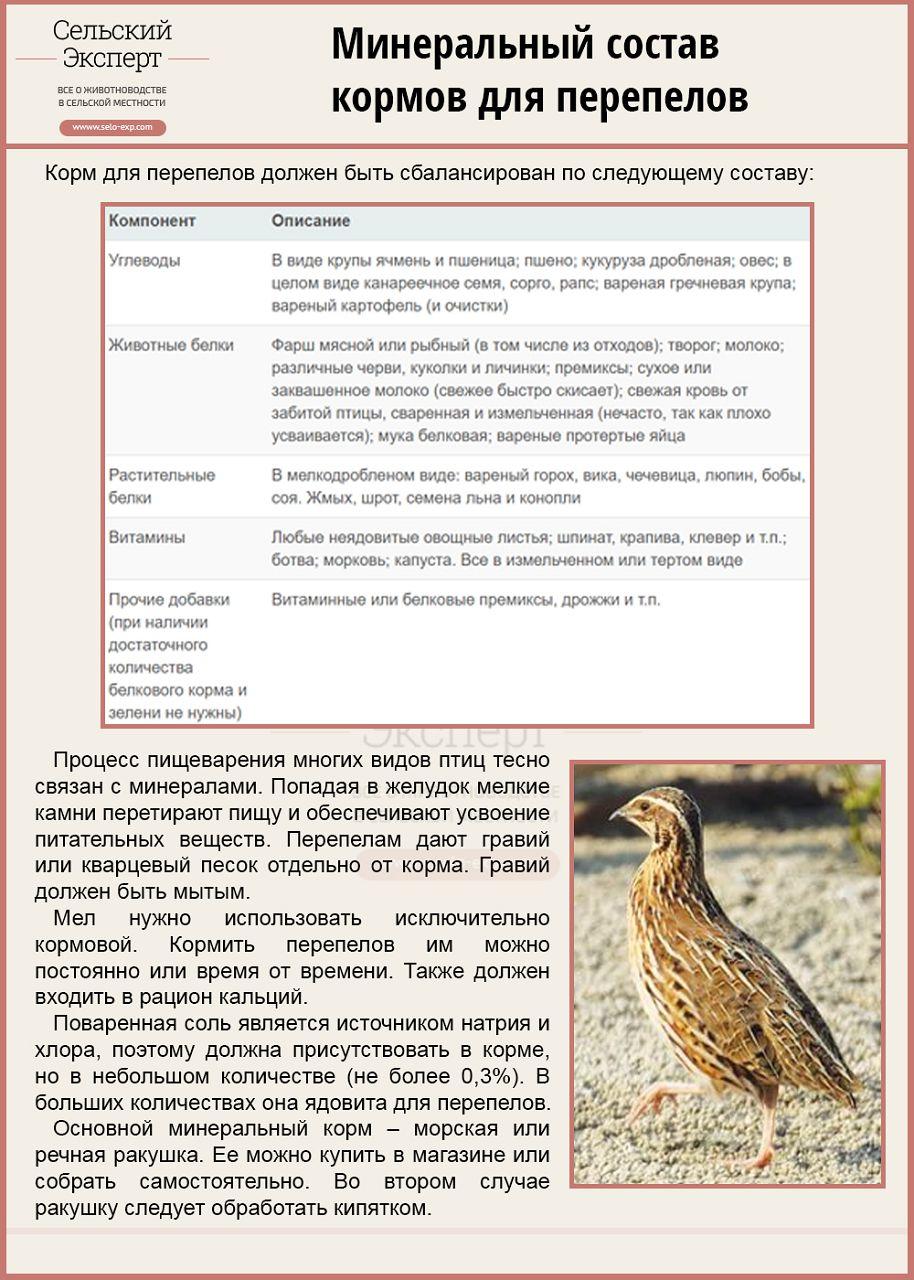 Корм для перепелов своими руками – рецепты для взрослых птиц и птенцов