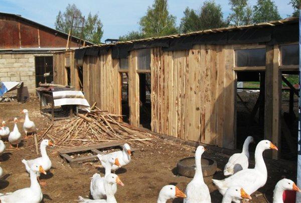 Технология содержания домашней птицы на даче и в личном хозяйстве