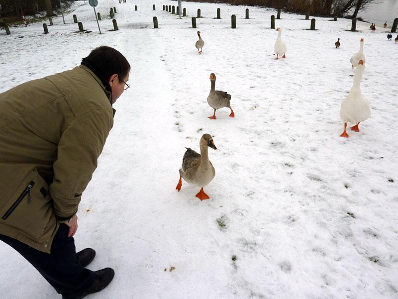 Чем кормить гусей в домашних условиях зимой