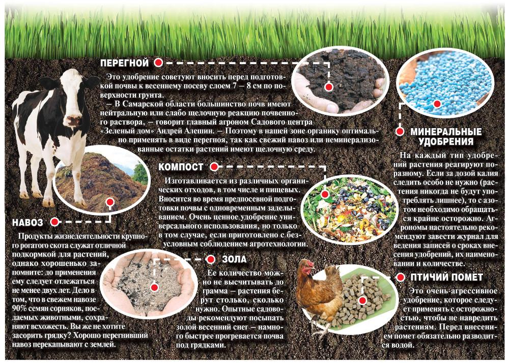 Птичий помет как удобрение и подкормка для растений