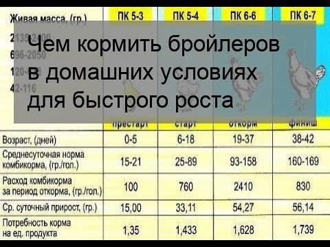 Ежедневное меню месячных бройлеров в домашних условиях